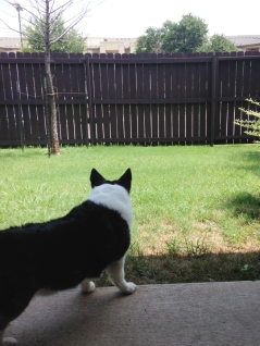 Justice in the yard, I think he heard something, lol.